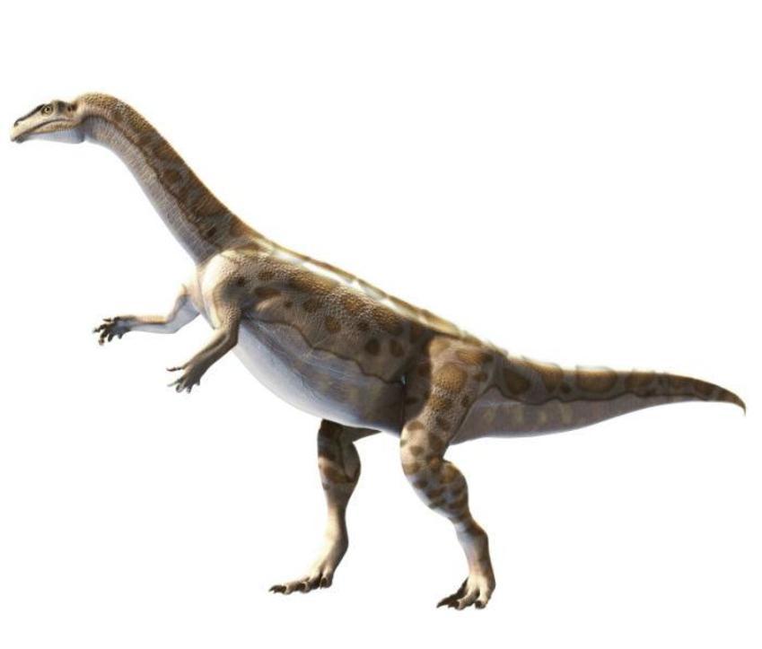 3 Plateosaurus