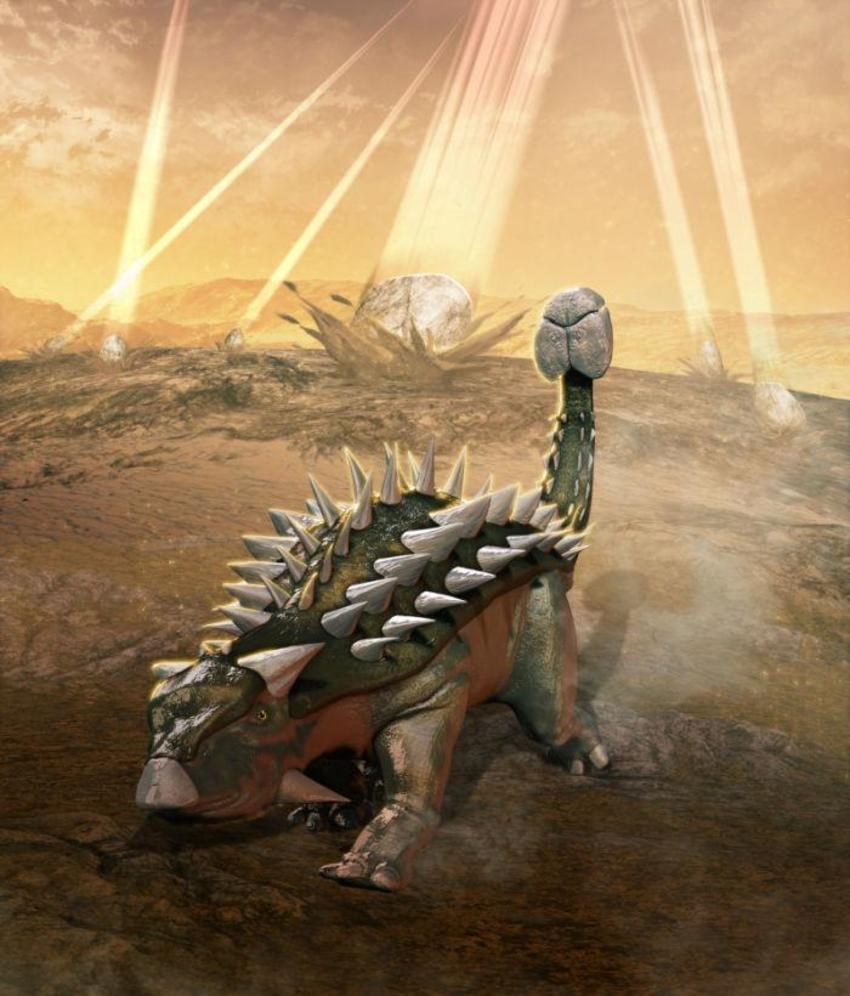24 Ankylosaurus