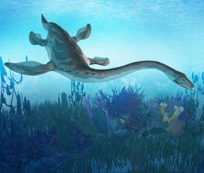 19plesiosaurus