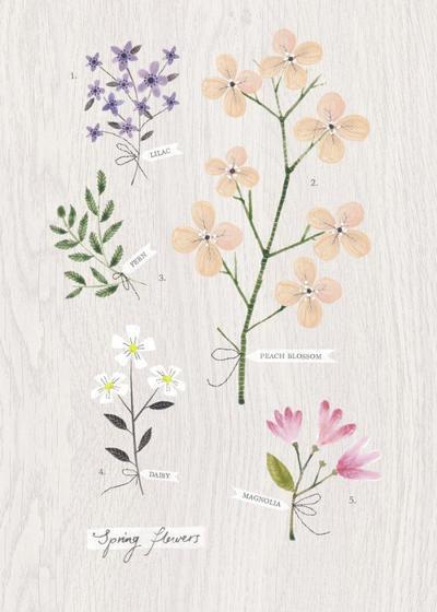peach-blossom-jpg
