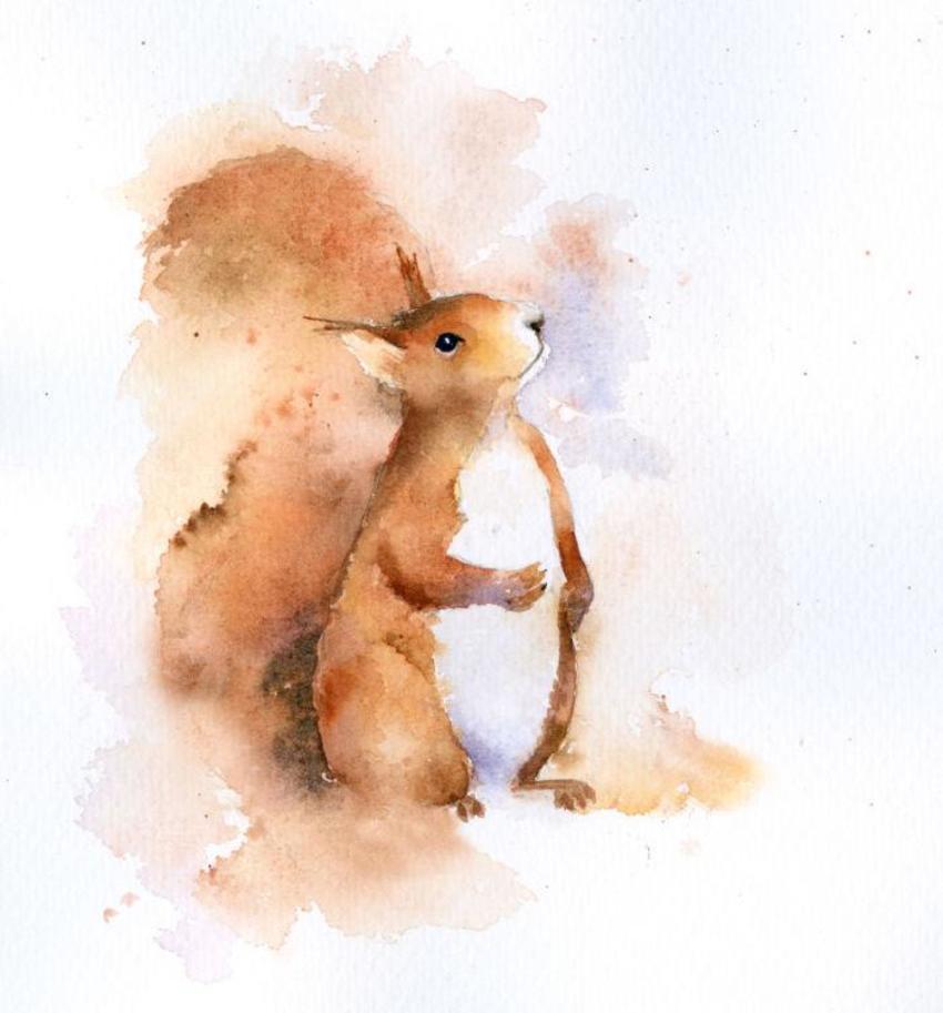 Perky Squirrel