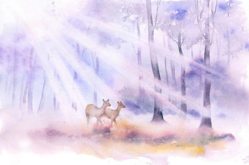 Daybreak Deer