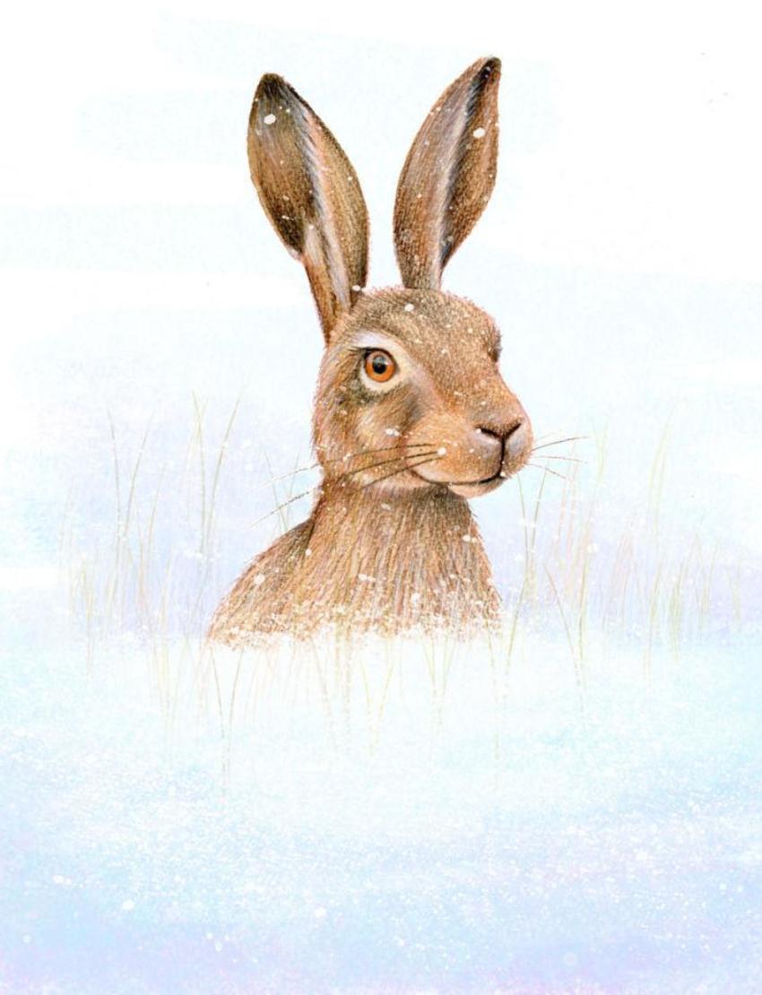 Hwood Rabbit Xmas Portrait