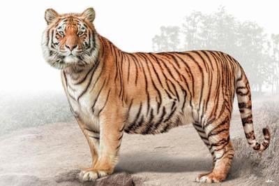 tiger-magnificient-land-mammals-val-2015-final-web