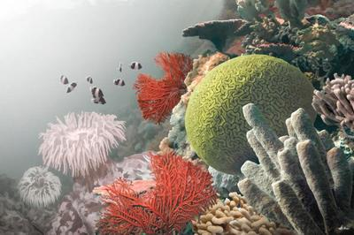 coral-selection-animal-magnificient-ocean-creatures-val-2015-final-web