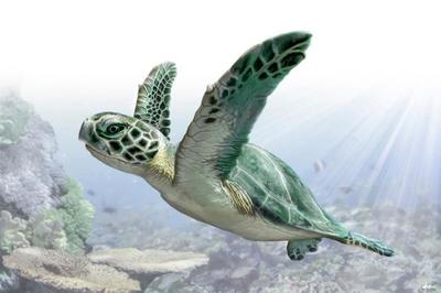 green-sea-turtle-animal-magnificient-ocean-creatures-val-2015-final-web