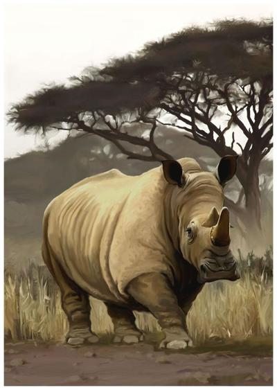 animal-rhino-mammal-jpg