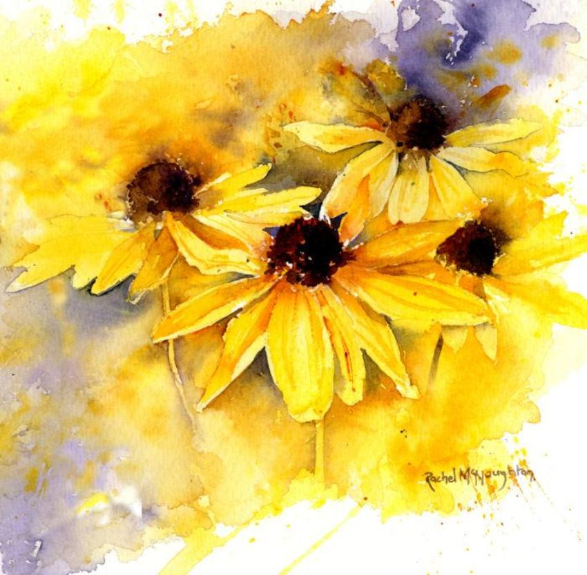 Yellow Rudbeckia Sq