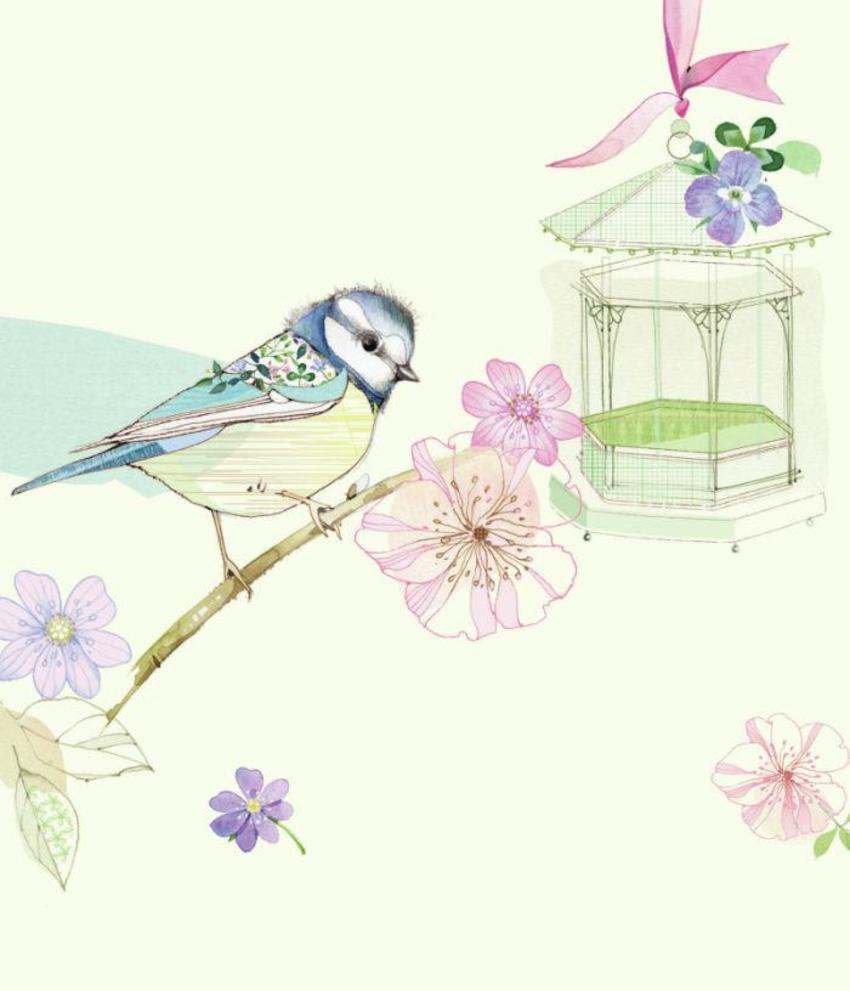 bird bluetit.jpg
