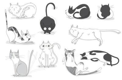 cat-animal-funny-humor-blackandwhite-colouring-pets