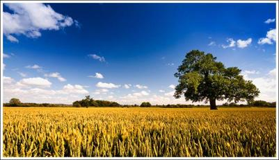 tree-and-cloud-jpg