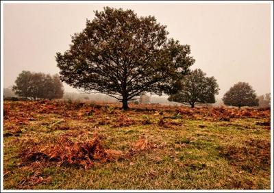 trees-in-the-mist-jpg