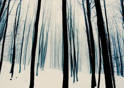 forest-snow-002-jpg
