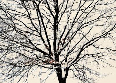 snow-tree-004-jpg