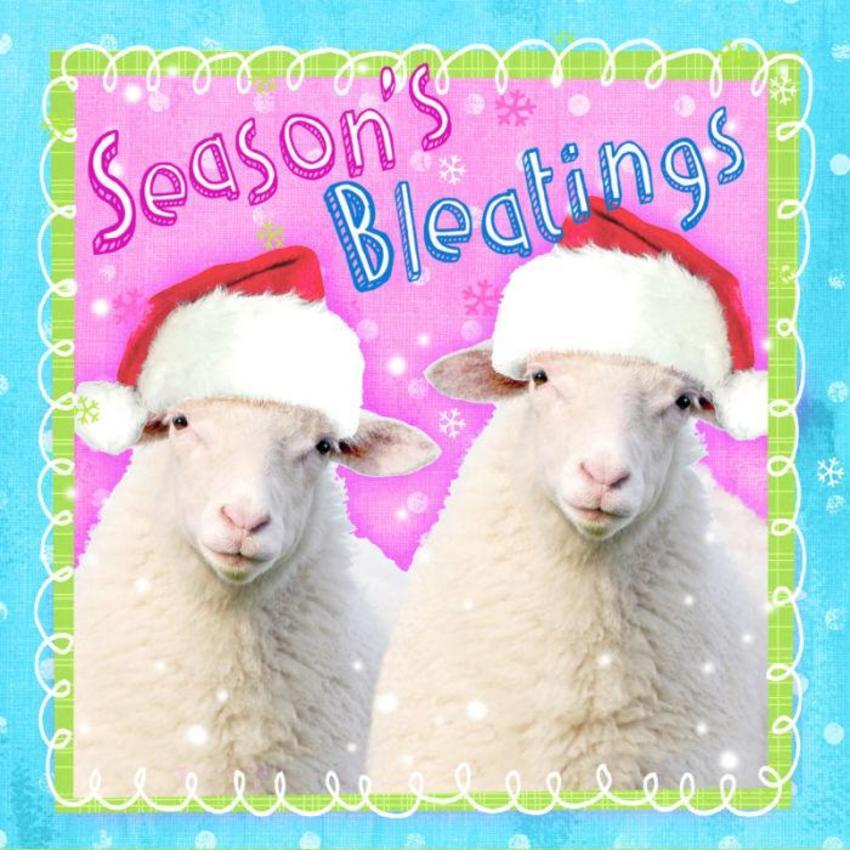 Hw Sheep 2
