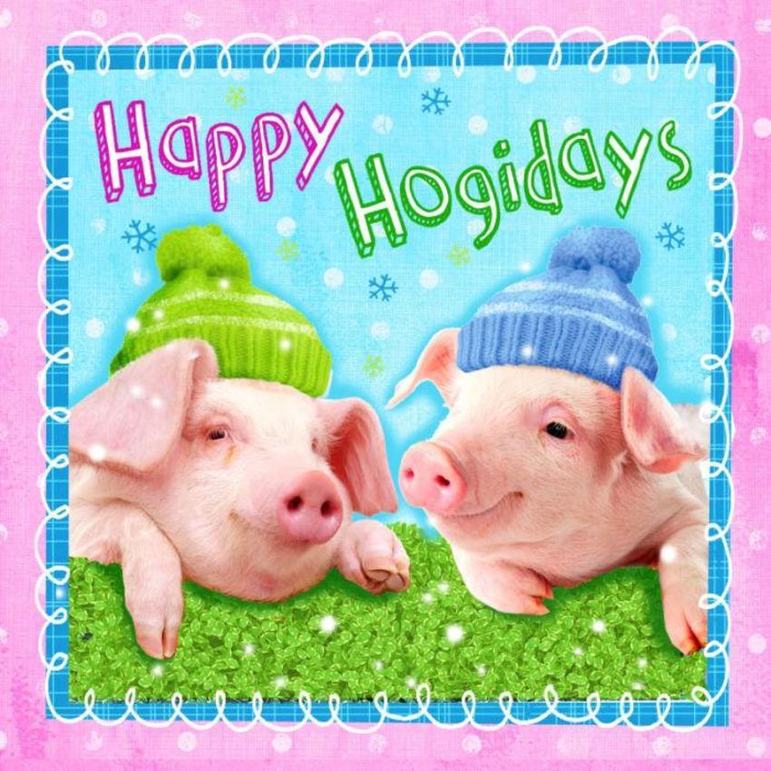 Hw Pigs 2