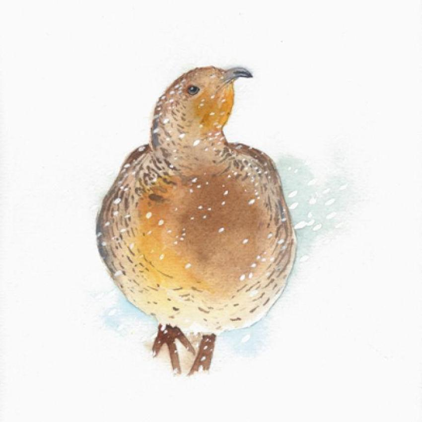 Christmas Partridge Snow