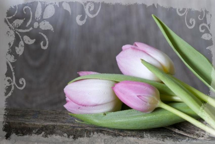 Tulip047