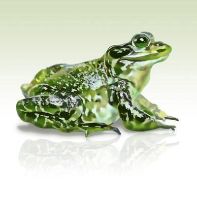 animal-frog-amphibian-jpg