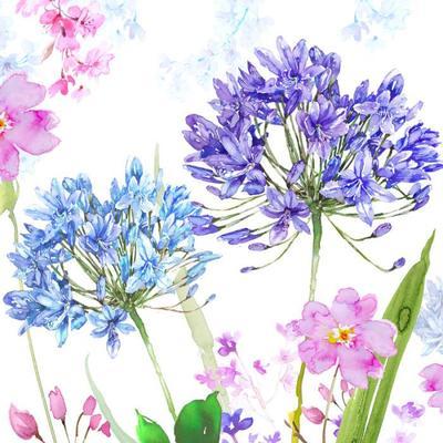 agapanthus-square-floral-copy-jpg