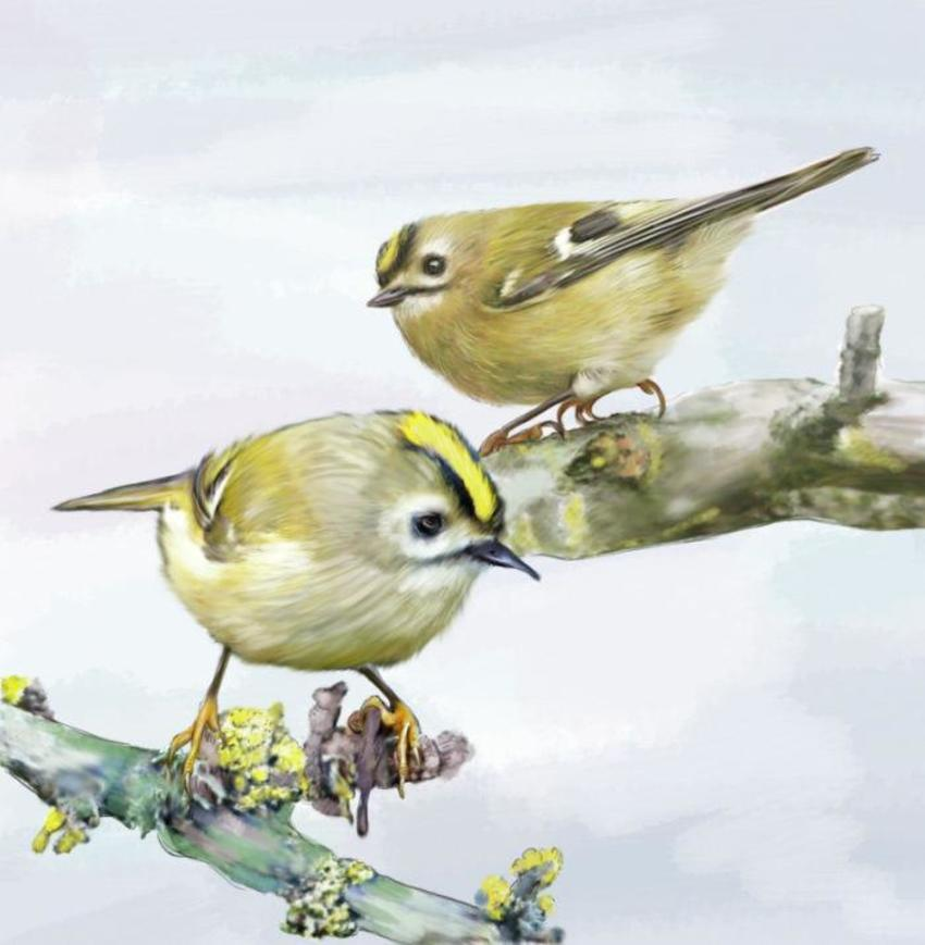 01 Slim Birds 2017