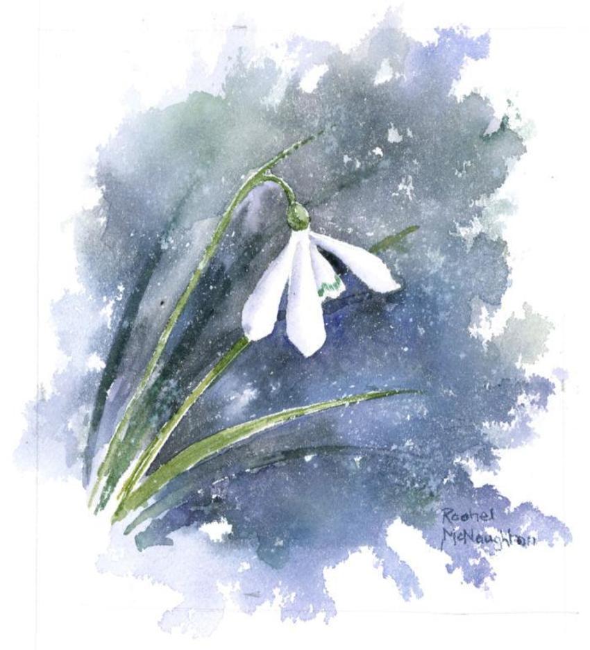 483 - Snowdrop.jpg