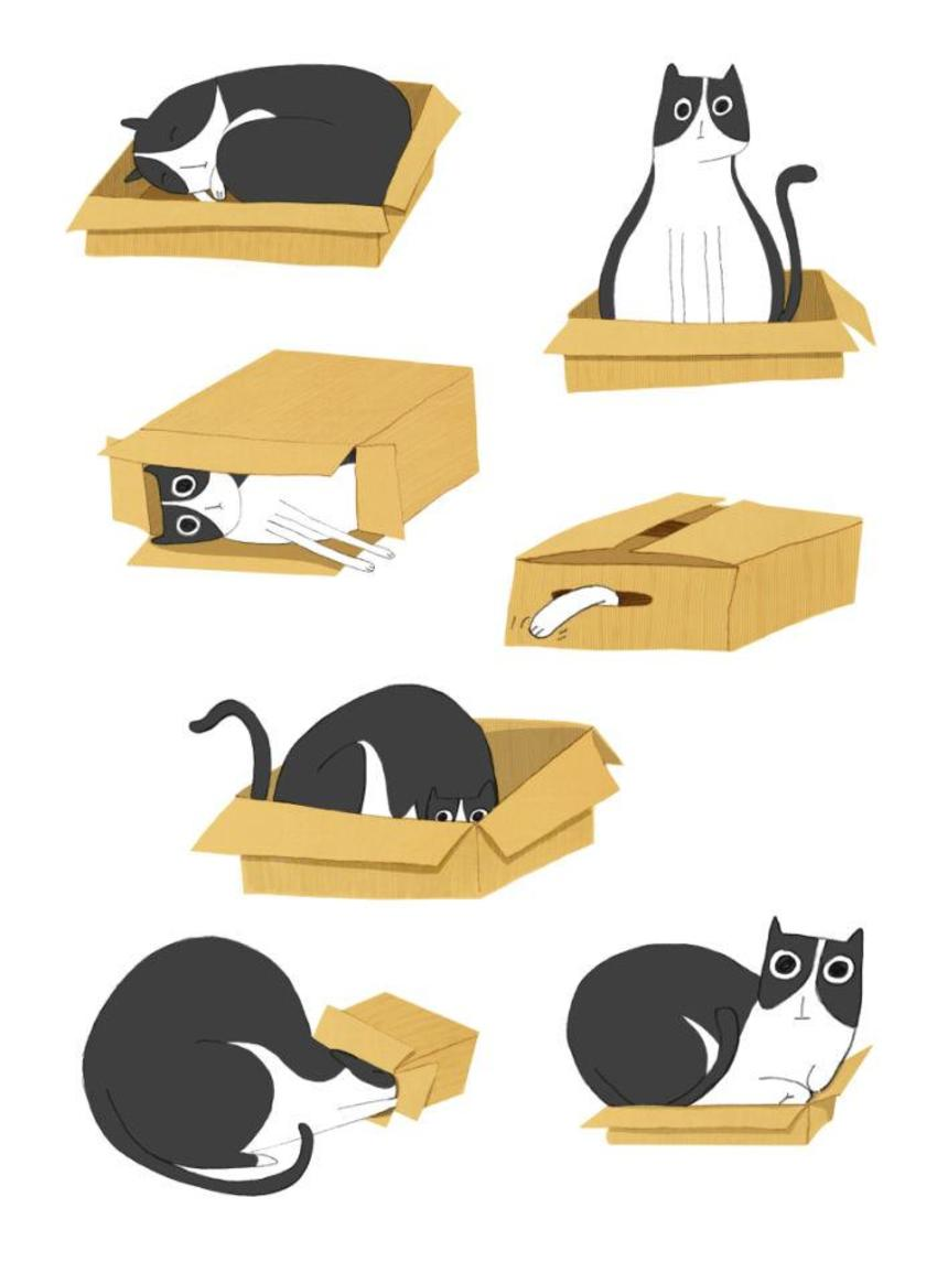 the box and the cat serie.jpg
