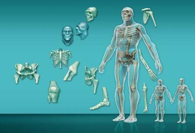 info-11-hombre-neanderthal-jpg