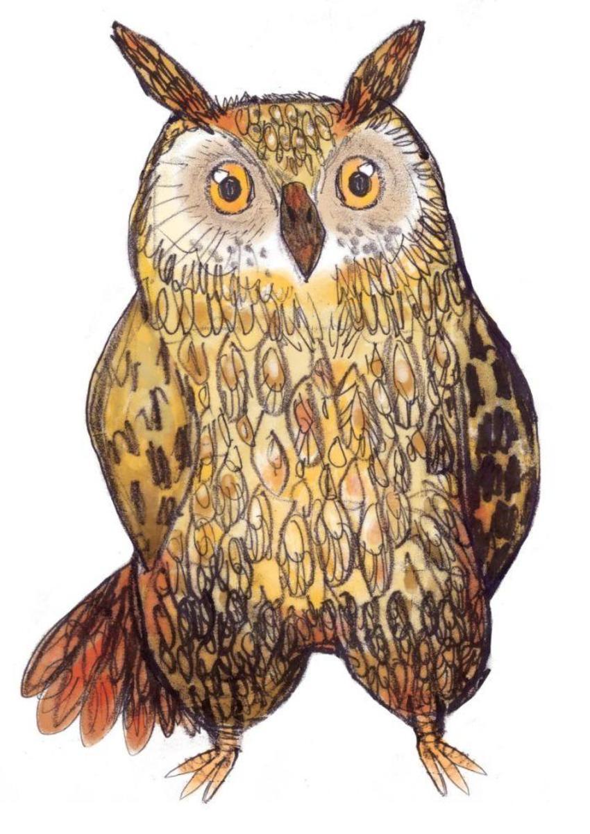 Owl High Rez