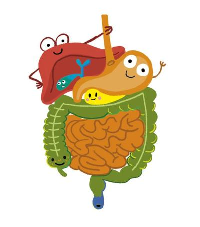 science-funny-cute-character-digestive-system-stomach