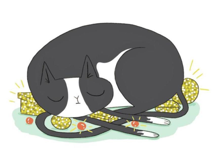 Cat Treasure Humor Sleeping Cute Funny