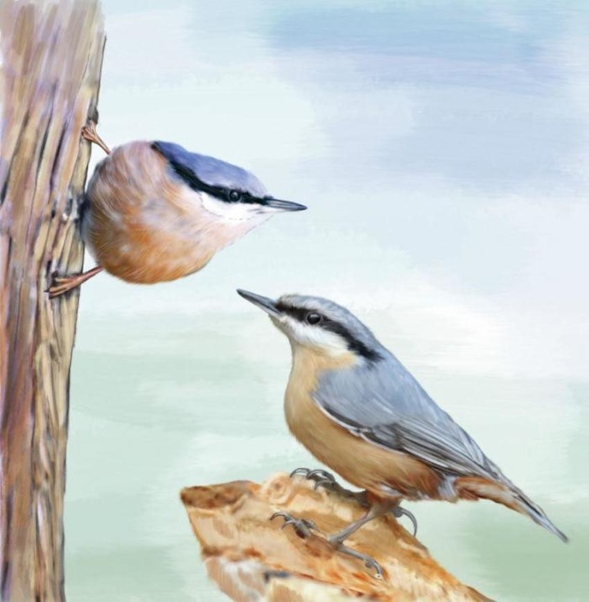 06 A Slim Birds 2017