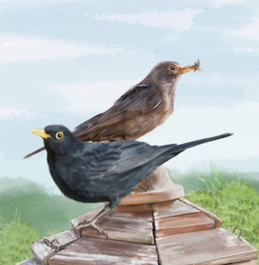 07 Slim Birds 2017