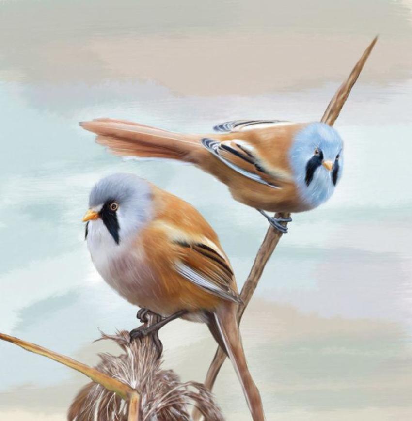 11 Slim Birds 2017