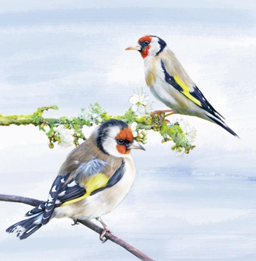 03 Slim Birds 2017