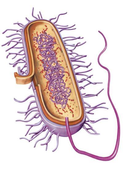 bacterium-copy-jpg