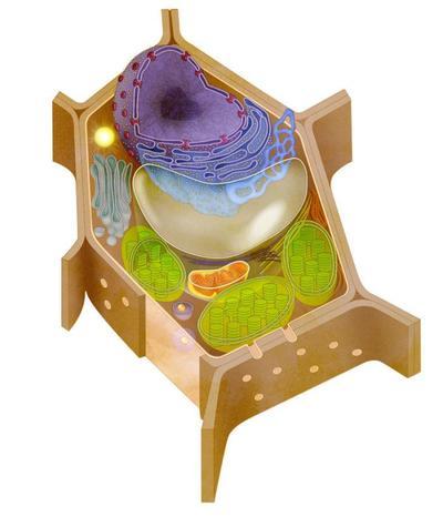 plant-cell-jpg