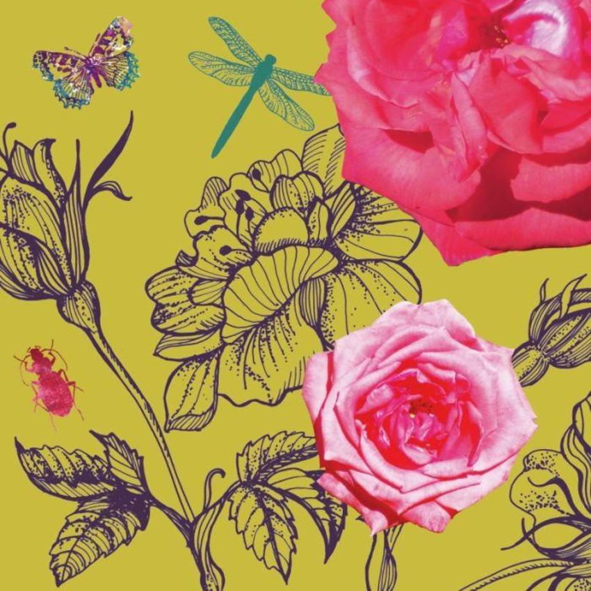 Amanda Hillier Roses & Insects
