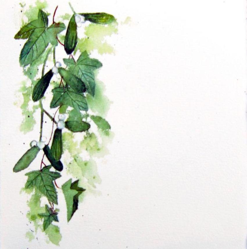 Mistletoe and ivy.jpg