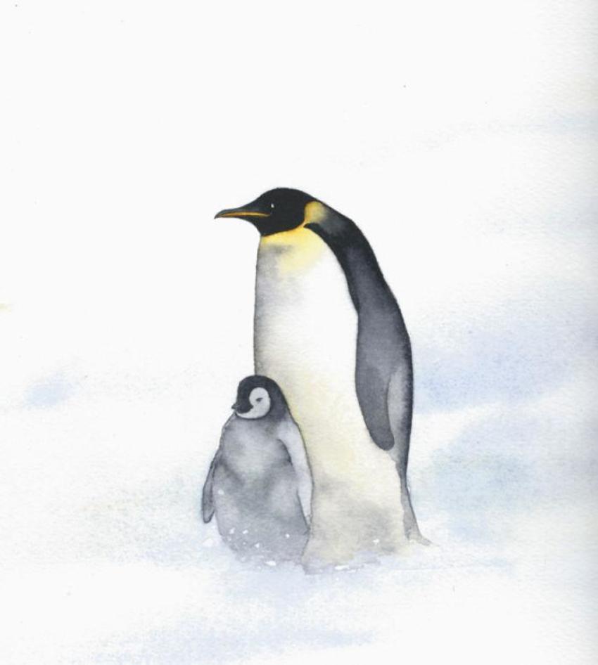 Penguin Baby Penguin