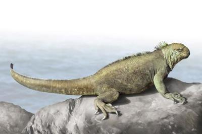 marine-iguana-animal-magnificient-ocean-creatures-val-2015-final-web