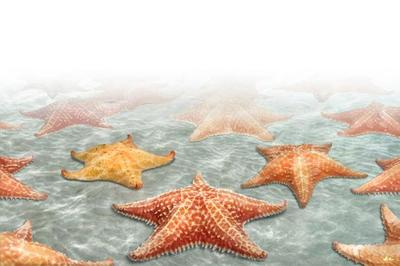 starfish-animal-magnificient-ocean-creatures-val-2015-final-web