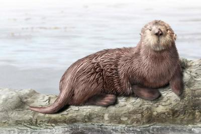 sea-otter-animal-magnificient-ocean-creatures-val-2015-final-v2-web-1