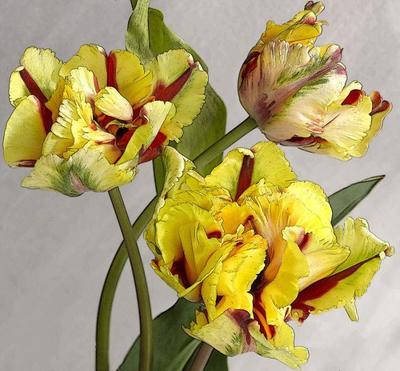 flower-fantasy-5-lmn27173-1-jpg