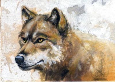 straw-wolf-darker-jpg