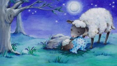 c-sheep-night-lamb