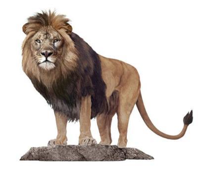 animal-lion-jpg