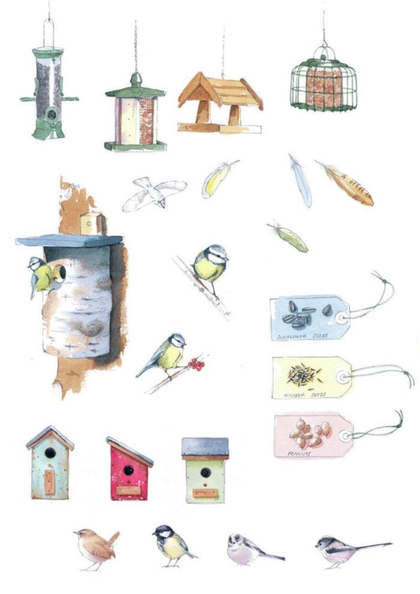 Birds and boxes.jpg