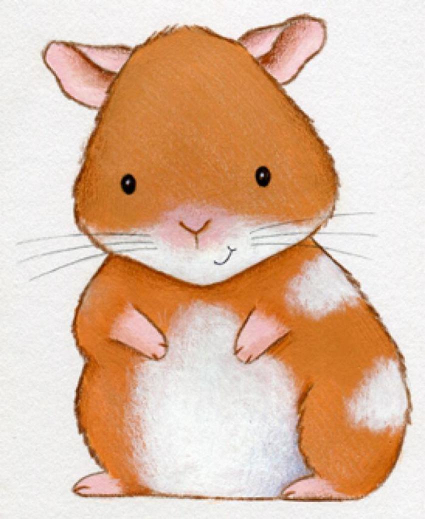 Hamster Colour2