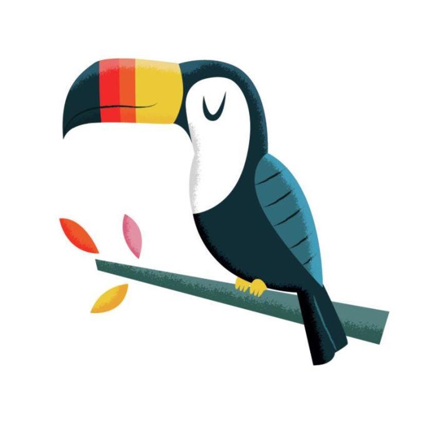 Toucan-01